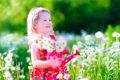 Leto – čas sadenia lentiliek