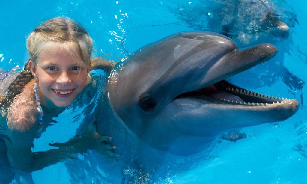Delfín liečiteľ