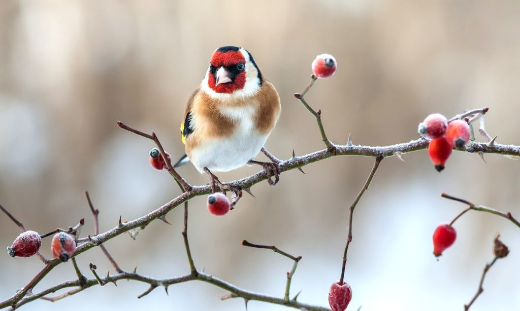 Pomôžeme zimným prikrmovaním vtákov prírode  alebo…?