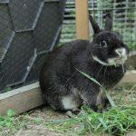 Zajačik v klube Slnečnica